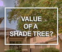 shade trees and home value
